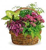 Plants: Secret Garden Basket